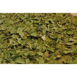 Betulla - foglie