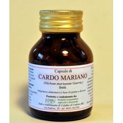 Cardo mariano (frutti) -...