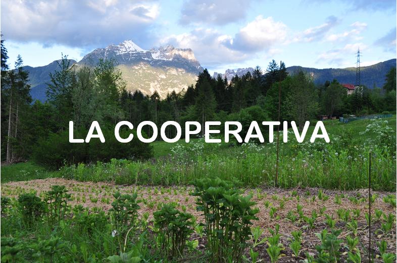 La Lioda Società Cooperativa Agricola e Forestale