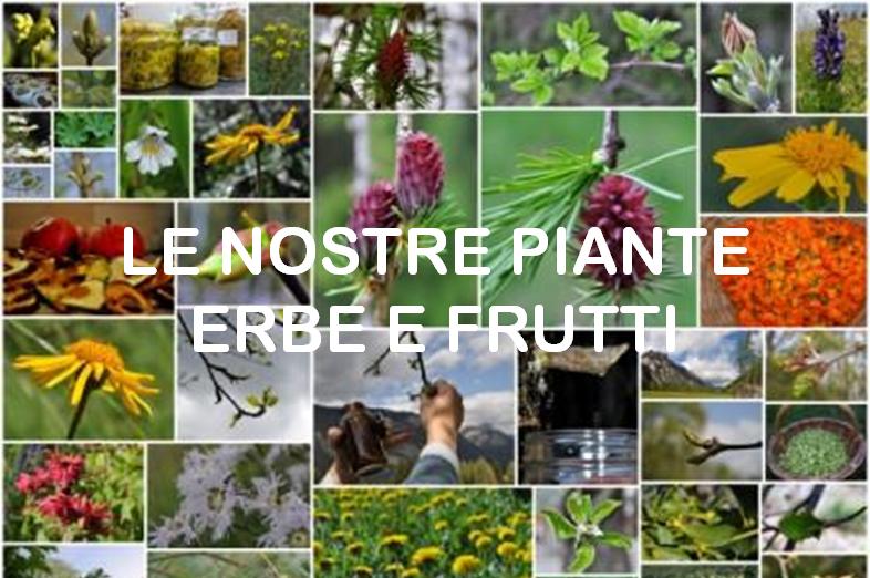 Le nostre piante e fiori