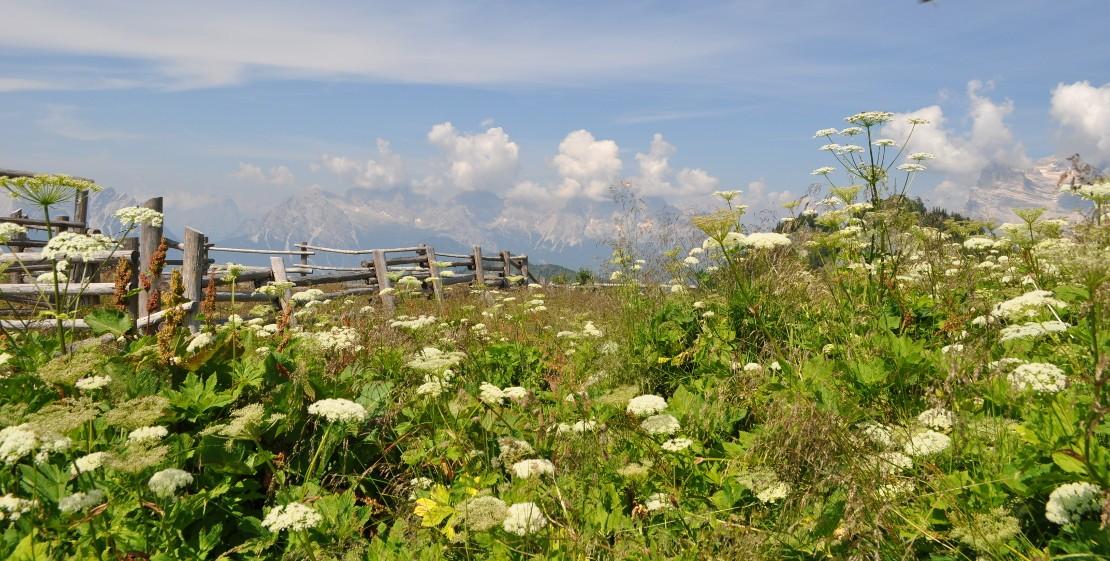 Vista panoramica dal monte Rite - sullo sfondo a destra il Pelmo